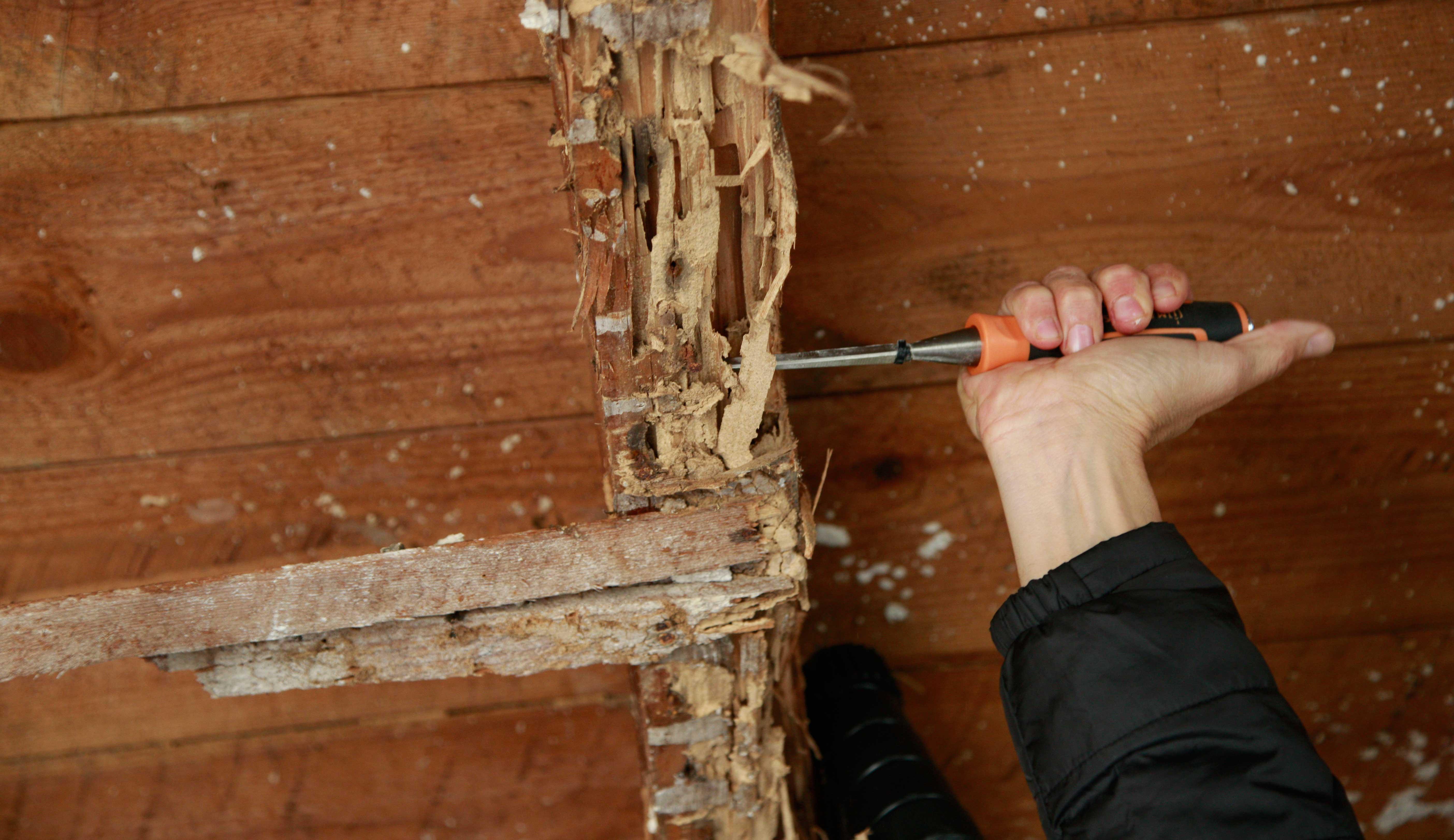 Diagnostic termites du bien immobilier bâti situé dans une zone infestée